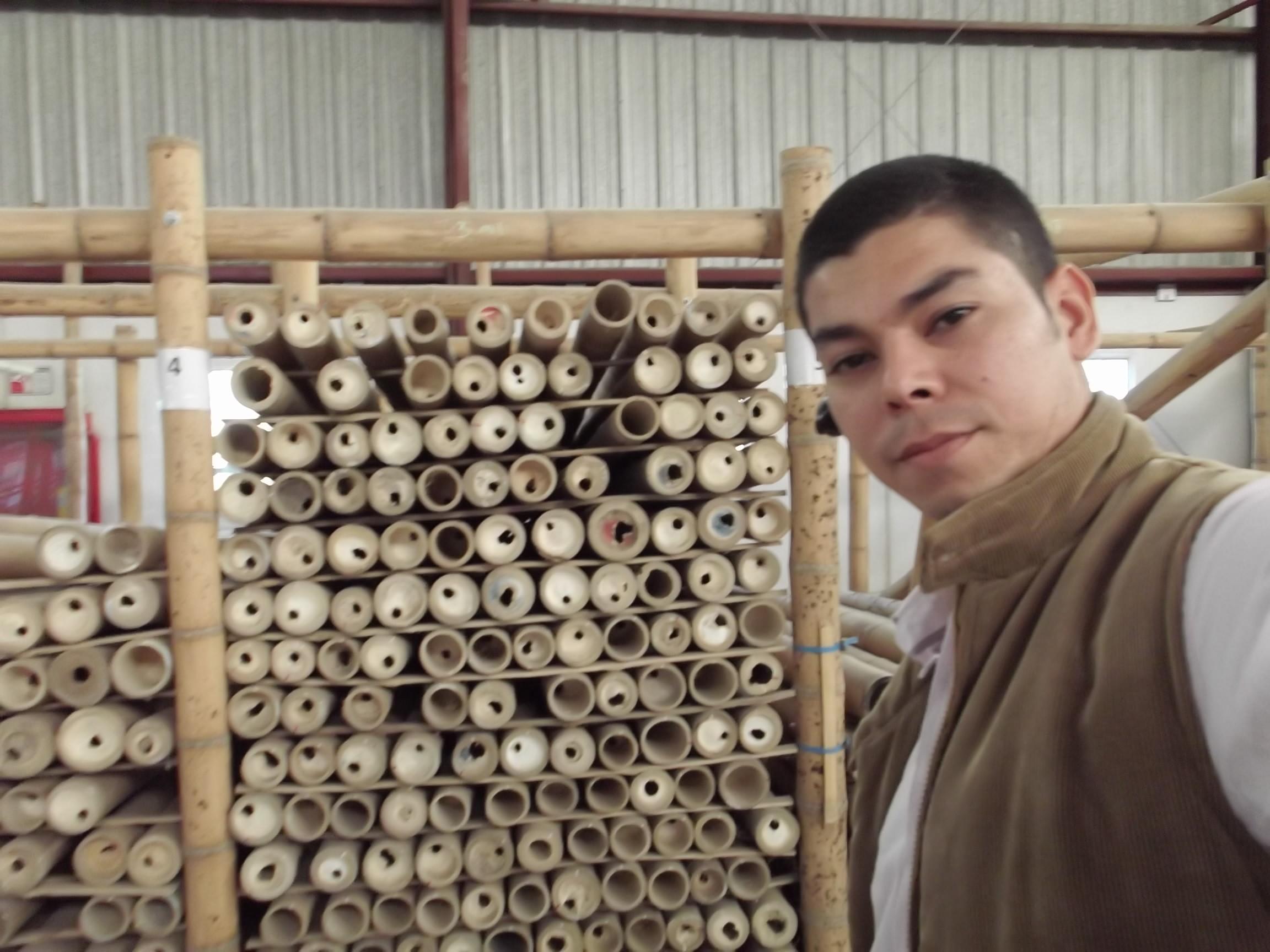 Pagos guadua bambu colombia for Oficinas western union bogota