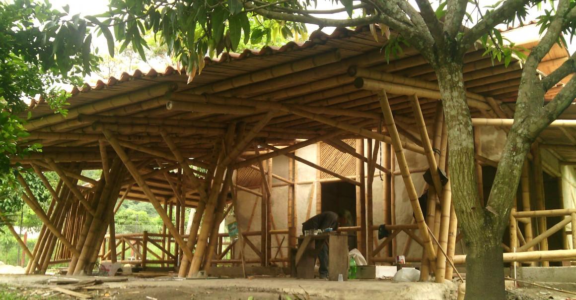 Guadua Bambu Colombia Cel What Y Viber 57 3178149055