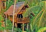 eco bamboolot