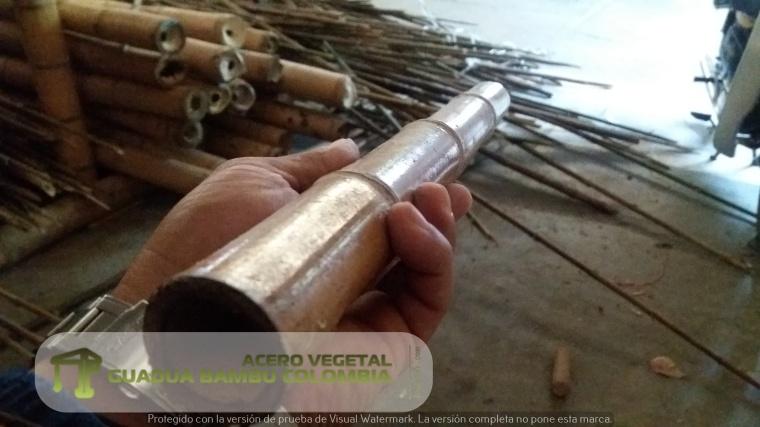 guadua bambu